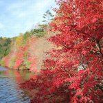 紅葉狩りは英語で何と言うの?英語で使える例文もご紹介します!