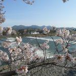 古都京都、嵐山の桜。2017年の見頃・開花予想は?