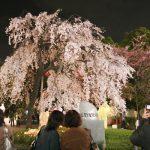 上野公園の「うえの桜まつり」2017!開催時期・見どころは?