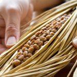 納豆の栄養や効果とは?苦手な人向けレシピもご紹介!