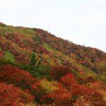 関東で紅葉を楽しむならココ!おすすめスポット5選!