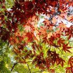 大阪箕面公園の紅葉。2016年の見頃は?駐車場はある?