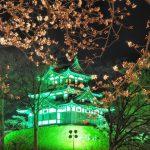 新潟・高田公園の桜、2017年の開花予想と見頃は?