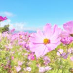 秋の花といえば何?代表的な花5選!名前や読み方も紹介!