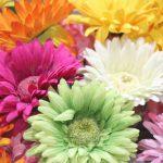 希望的な花言葉を持つお花には何があるの?おすすめ6選!
