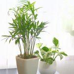 初めてでも大丈夫!部屋に置く観葉植物おすすめ5選!