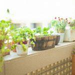 お部屋に置きたいミニ観葉植物の育て方!置き場所はどこがいい?