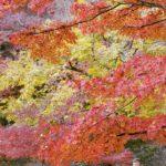 香嵐渓の紅葉2017年の見頃は?もみじまつりやライトアップはいつ?