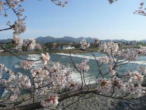 嵐山の桜3