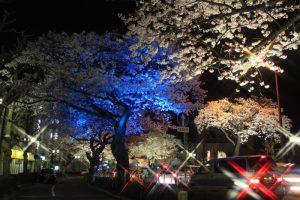 きれない夜桜
