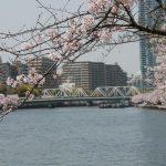 関西の桜の名所 人気ランキング!おすすめTOP5を厳選!