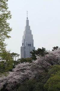 tokyohanami1