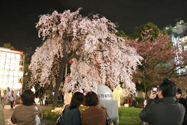 うえの桜まつり1