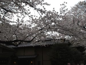 うえの桜まつり3