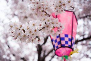 桜が光るところ