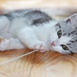 一人暮らしのペットには「猫」がオススメ!かかる費用は?