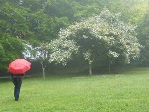傘をさすシーン