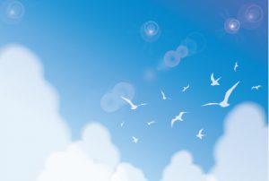雲ひとつない青い空と菜の花