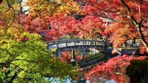 永観堂のきれいな紅葉