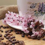 人気のコーヒー豆とは?その種類と特徴を一覧で5つご紹介!
