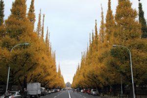 明治神宮外苑の美しいイチョウ並木