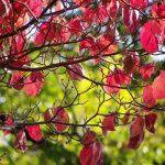東京新宿御苑の紅葉、2017年の見頃はいつ?ライトアップは?
