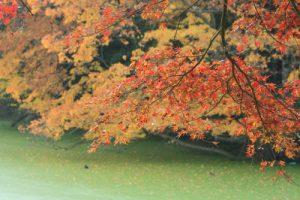 養老渓谷のきれいな紅葉