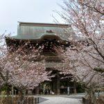 古都鎌倉で桜を楽しむならココ!桜の名所おすすめ5選!