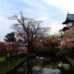 北海道・松前公園の桜、2017年の開花予想や見頃はいつ?