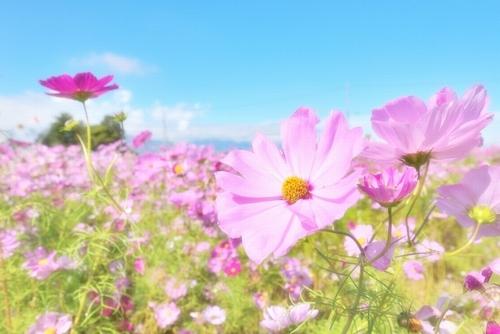 秋の花といえば何?代表的な花5...