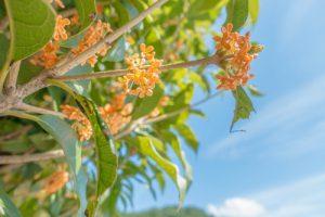 autumnflower2