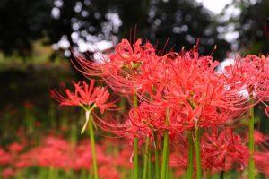 autumnflower5