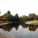 見どころ沢山!昭和記念公園の紅葉、2017年の見頃と楽しみ方!