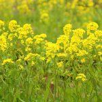 春の花といえば何?開花時期や花言葉は?漢字ではどう書く?