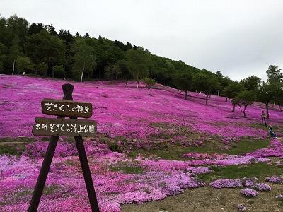 芝桜の咲く丘