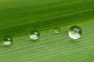 梅雨の水しぶき