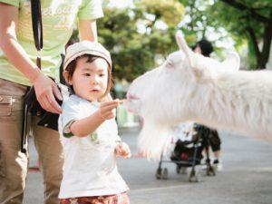 赤ちゃんの動物園でのふれあい