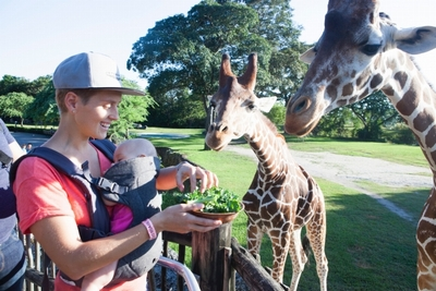 赤ちゃんと動物園で過ごす