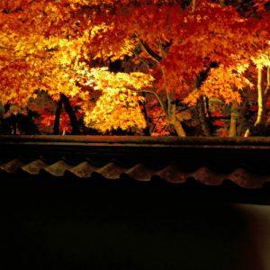 夕方の永観堂の紅葉