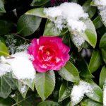 ひょう(雹)・あられ(霰)・みぞれ(霙)の違いとは?雪とはどう違うの?
