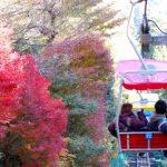 東京・高尾山の紅葉、2017年の見頃はいつ?アクセスや駐車場も紹介!