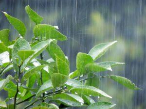 雨に打たれる葉っぱ