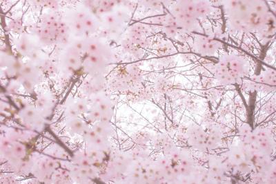 二十四節気の春の季節