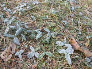 霜降の時期