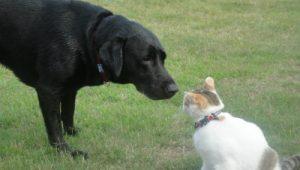向かい合う犬と猫