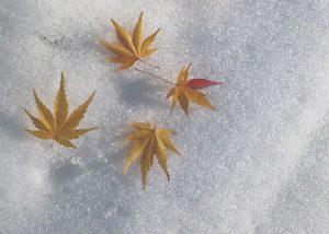 大雪の季節