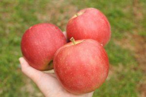 りんご3つ