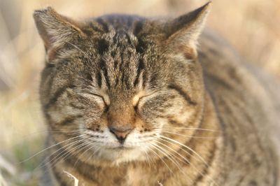 片耳の一部がカットされた猫