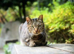 野良猫or地域猫?