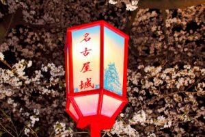名古屋城の夜桜